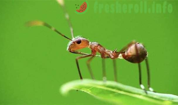 Impressive reasons that make the ants amazing creatures