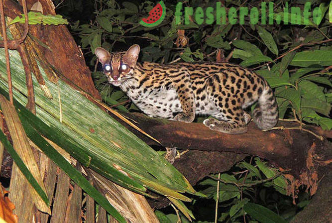 Rare plants and creatures of South America