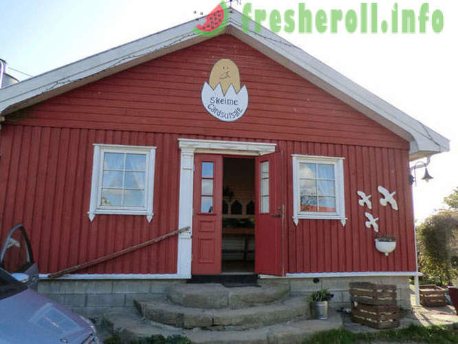 Unusual shop without the seller in Norway